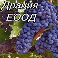 Драция ЕООД